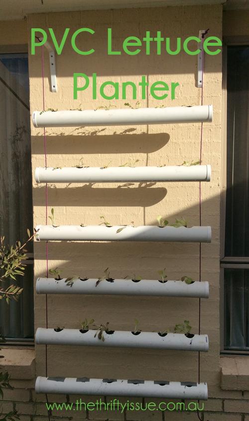 DIY Lettuce hanger